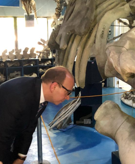 British Ambassador Tours Museum with World's 2nd Largest Brydes' Whale Bone Collection